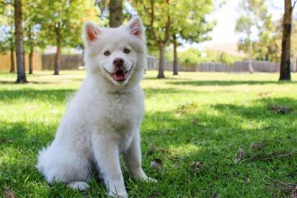 Carbonari/Restelli: una zona attenta alle esigenze dei cani